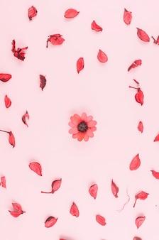 Pétales sur table rose