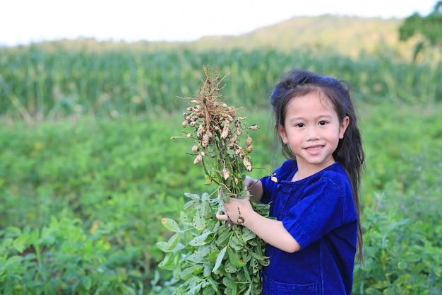 Un petit agriculteur récolte des arachides dans une plantation agricole.