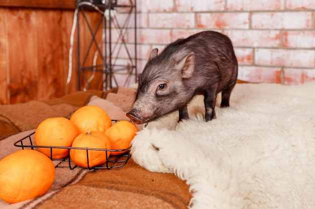 Petit animal et fruits