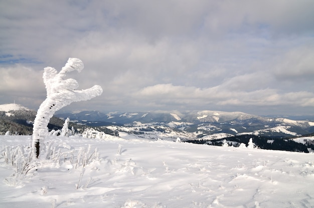 Petit arbre couvert de neige sur fond de montagnes. beauté nordique, faune, loisirs de montagne