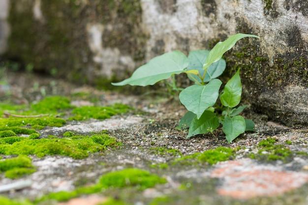 Petit arbre et fougères vert mousse sur mur brique