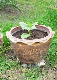 Petit arbre avec un pot