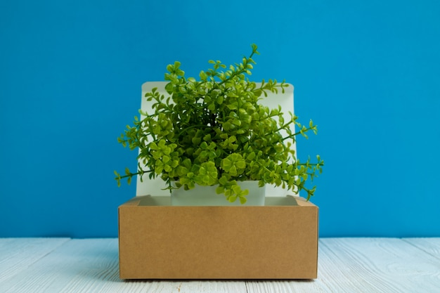 Petit arbre poussant dans une boîte en carton brun ou un plateau