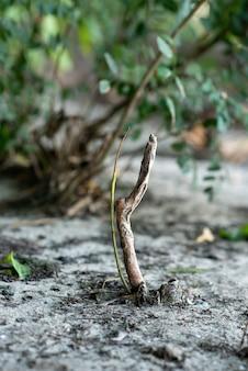 Un petit arbre pousse hors du sol dans une grande forêt