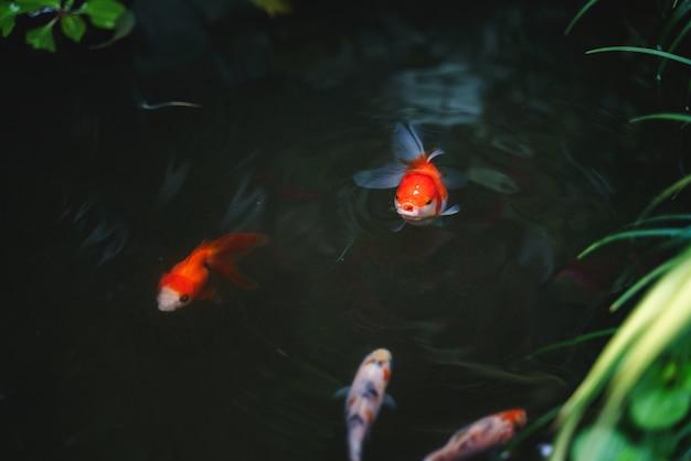 Petit bassin à poissons