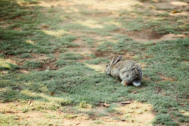 Petit bébé lapin marchant sur le pré mange de l'herbe