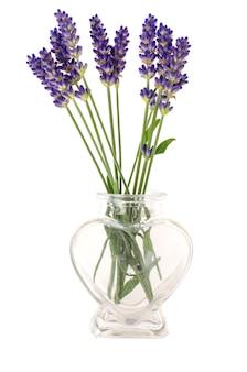 Petit bouquet de fleurs de lavande bleu.