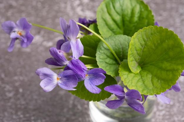 Petit bouquet de printemps, gros plan de violettes. flou artistique