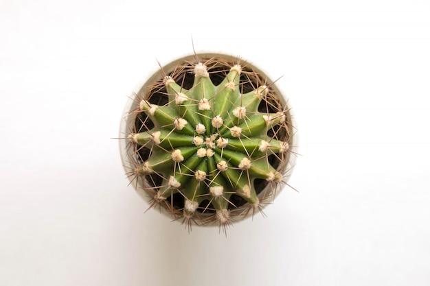 Petit cactus sur blanc. vue de dessus. espace libre.