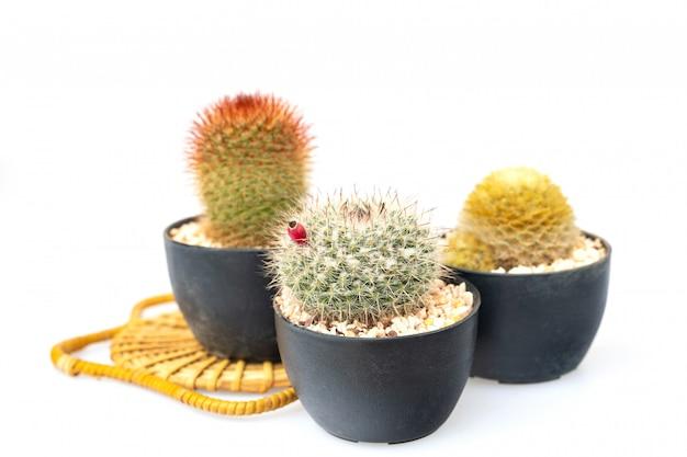 Un petit cactus dans la plante en pot pour le cadeau isolé sur fond blanc.