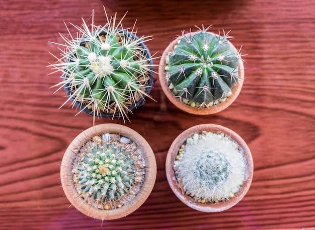 Petit cactus plusieurs espèces dans un vase, vue de dessus, mise à plat
