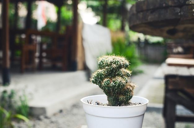 Petit cactus en pot de fleur blanc pour la décoration de la maison