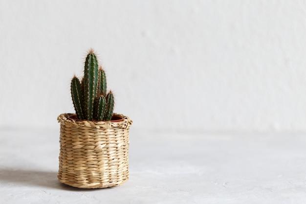 Petit cactus en pot