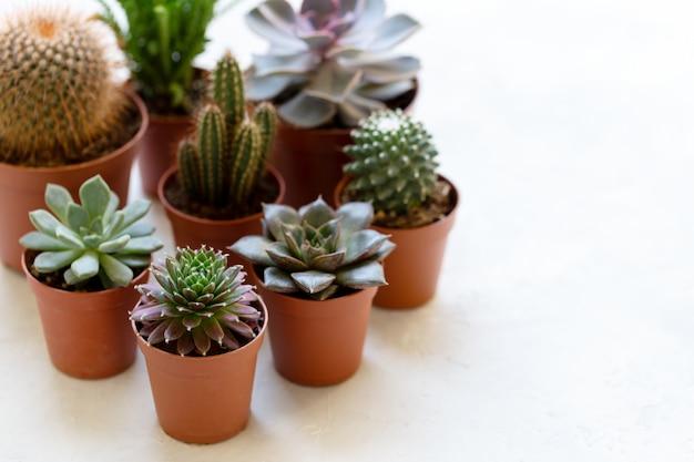 Petit cactus et succulent