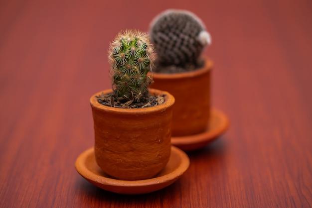Petit cactus tropical vert se bouchent