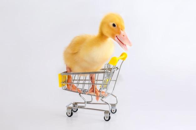 Un petit canard jaune est assis dans un panier sur un fond blanc isolé.