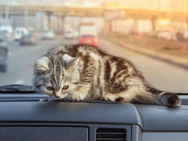 Petit chat couché dans la voiture