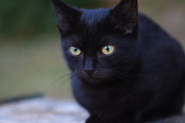 Petit chat noir aux grands yeux assis dans la rue.