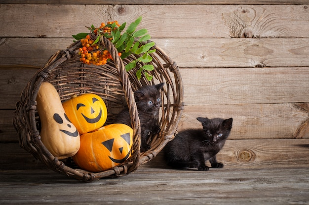 Petit chat noir avec des citrouilles d'halloween
