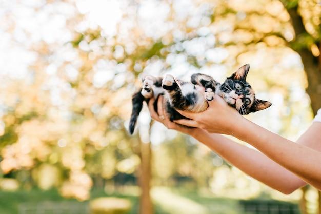 Petit chat de race poilue
