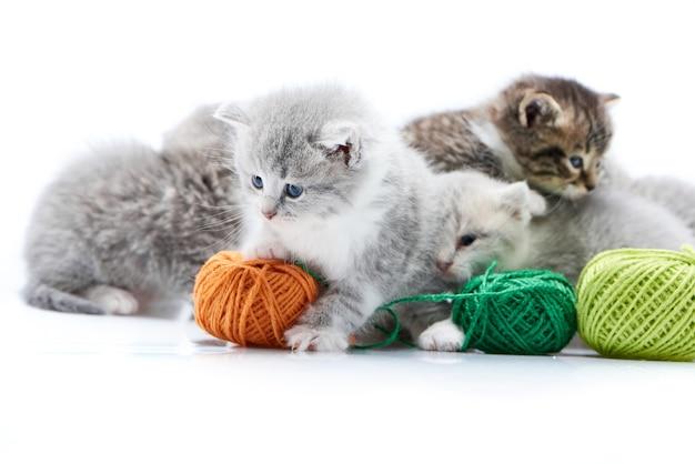 Petit chaton adorable moelleux gris jouant avec des boules de fil de laine vertes orange.