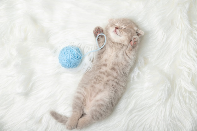 Petit chaton au gingembre dort sur un tapis blanc. sommeil. relaxation