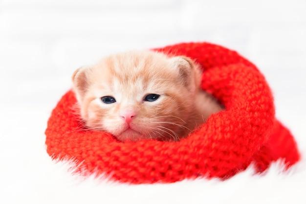 Le petit chaton au gingembre de la saint-valentin en gros plan se prélasse doucement et regarde la caméra dans un bonnet tricoté