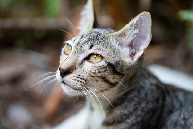 Petit chaton de chat tigré brun se reposant sur le sol