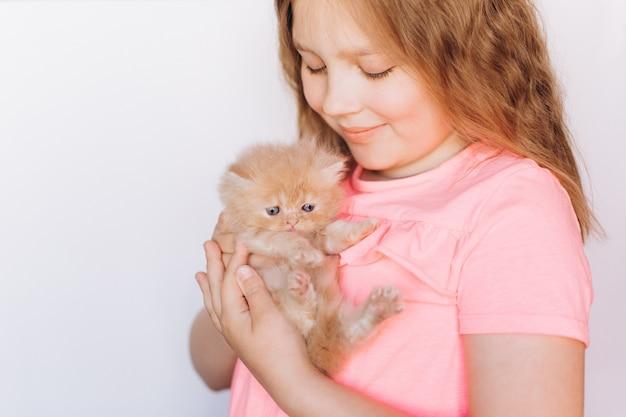 Petit chaton domestique persan mignon dans la main de la jeune fille