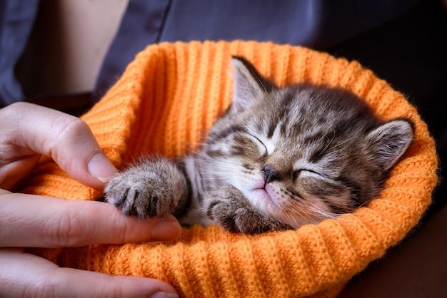 Un petit chaton dormant dans les mains