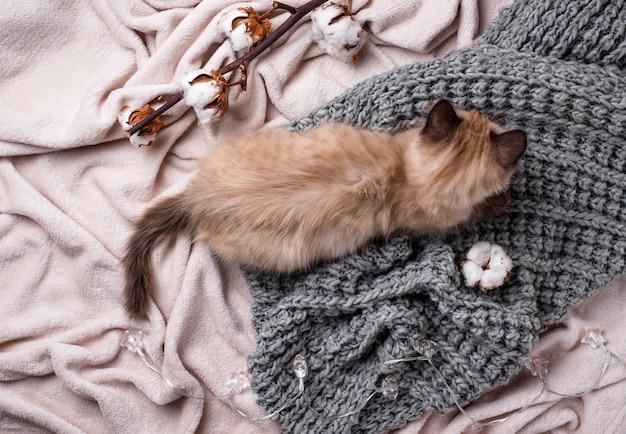 Petit chaton drôle sur plaid tricoté