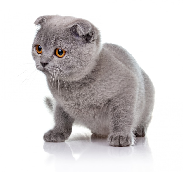 Petit chaton isolé