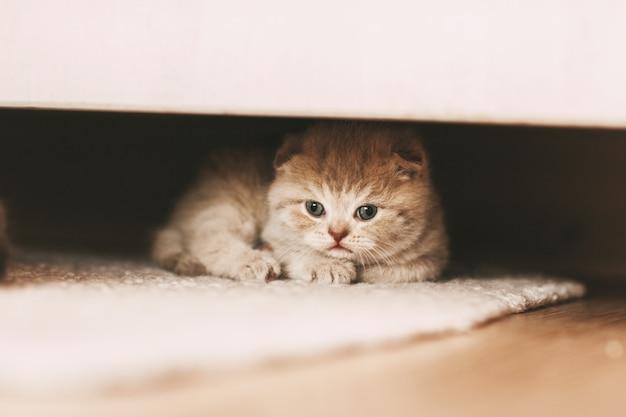 Un petit chaton jaillit de sous le placard.