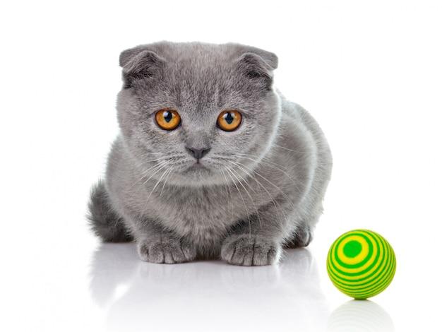 Petit chaton jouant avec des balles isolées