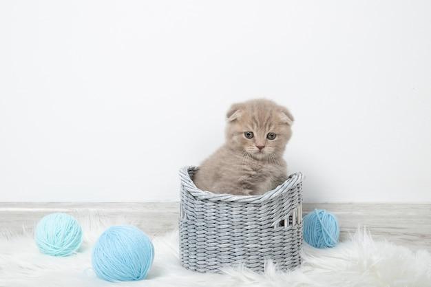 Petit chaton mignon dans un panier avec des boules de fil sur un mur blanc