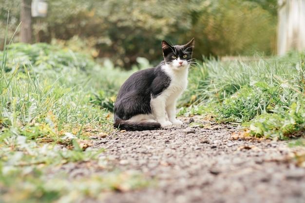 Petit chaton noir et blanc de 4 mois est assis sur le chemin, parmi l'herbe verte floue
