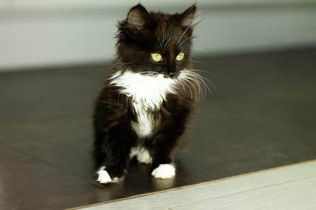 Petit chaton noir mignon avec la poitrine et les pattes blanches et les yeux jaunes, assis sur un sol sombre