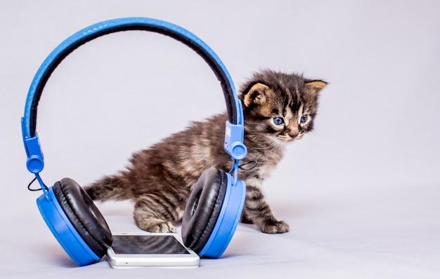 Un petit chaton près du casque et du téléphone portable. écoutez de la musique classique