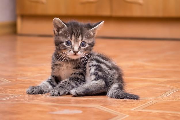 Un petit chaton rayé assis dans la pièce. portrait d'un petit chaton à l'intérieur
