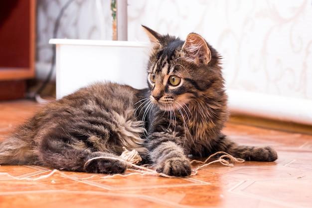 Un petit chaton rayé assis dans la pièce sur le sol