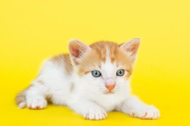 Petit chaton rouge