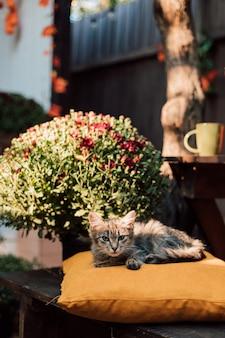 Le petit chaton se trouve sur un oreiller jaune dans la cour en automne