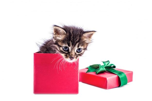 Petit chaton tabby dans une boîte cadeau rouge avec un arc