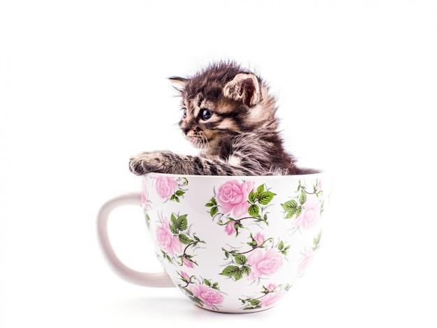 Petit chaton tabby dans une grande tasse blanche