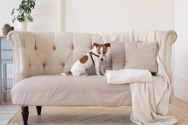 Petit chien sur le canapé
