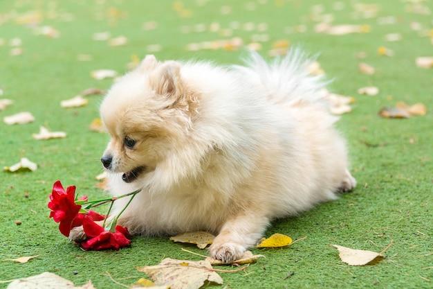 Petit chien couché sur l'herbe