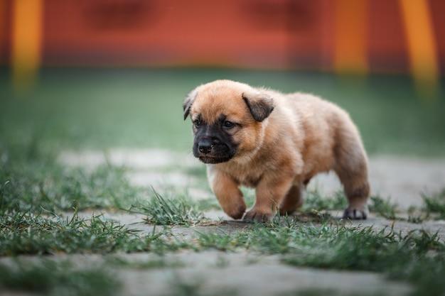 Petit chien courant dans le jardin