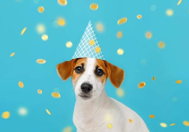 Petit chien dans un chapeau de fête avec des confettis