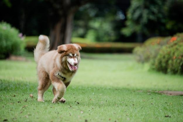 Petit chien dans un parc en plein air. portrait de mode de vie.