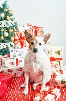 Petit chien debout à côté de décorations de noël